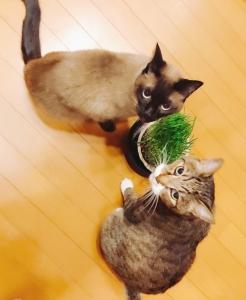 猫の生野菜。