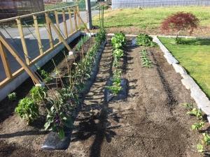 家庭~菜園はじめました!