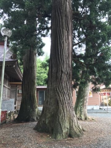 樹齢何年?