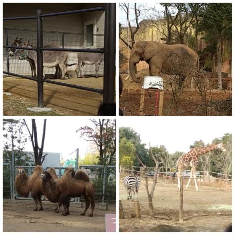 八木山動物公園。